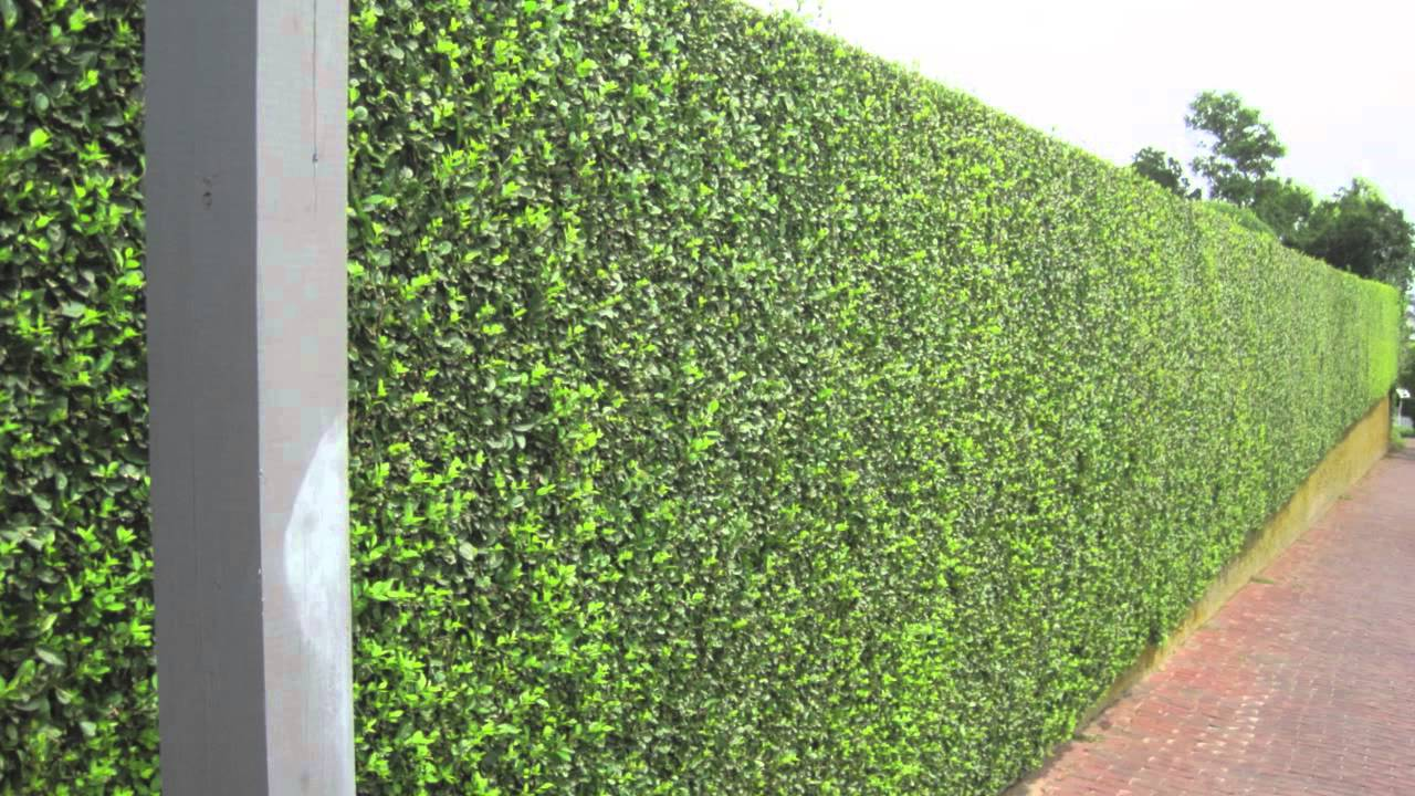 Privacy Hedges - YouTube