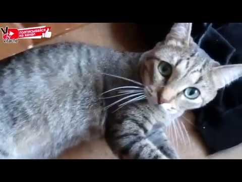 Вопрос: Как вы относитесь к колбасным shy кличкам котам – кошкам (см. ниже)?