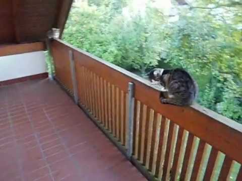 katzen auf dem balkon youtube. Black Bedroom Furniture Sets. Home Design Ideas