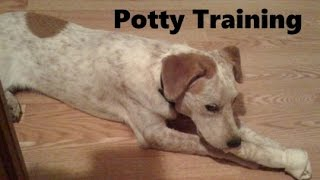 How To Potty Train A Labraheeler Puppy - Labraheeler House Training Tips - Labraheeler Puppies