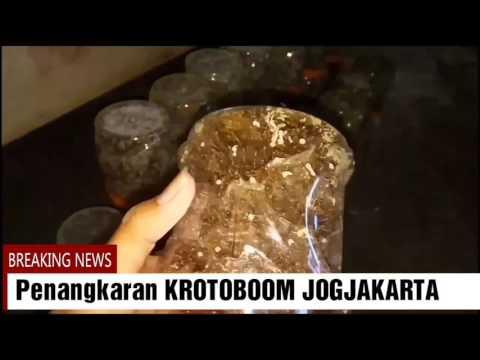 KROTOBOOM; Tips Pemesanan Bibit Kroto