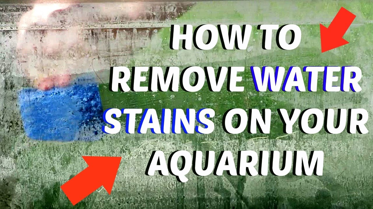 How To: Remove Water Stains/Water Build Up On Your Tank. - YouTube