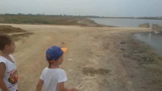 Азовская креветка. Как и где ловить креветку на азовком море.