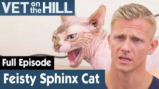 Hormones Driving Sphynx Cat Crazy! | FULL EPISODE | S02E07 | Vet On The Hill