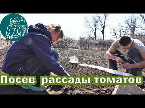 🍅 Посадка томатов на рассаду в парник по технологии Гордеевых