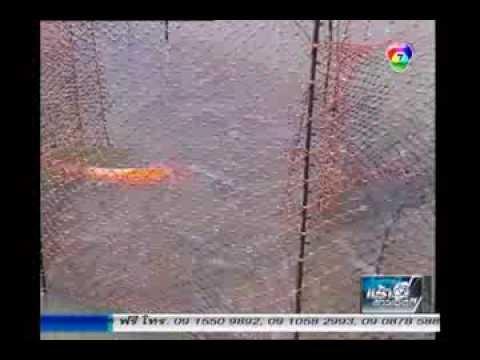 สารคดีเกษตร : เลี้ยงปลาแฟนซีคาร์ฟในบ่อกุ้ง