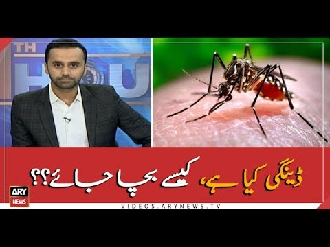 What is Dengue? How to protect yourself from it?