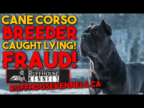Cane Corso Breeder SCAM CAUGHT In The Act! @Ruffhouse Kennels Canada