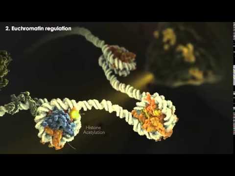 Histonas y sus modificaciones estructurales