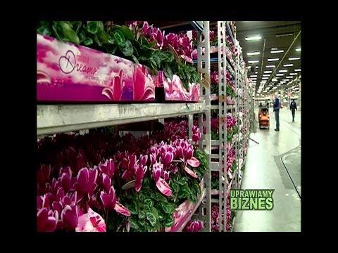 Jak działa giełda kwiatowa w Aalsmeer w Holandii (część 1/2) - Uprawiamy Biznes