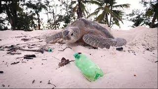 Indian ocean's most important turtle nesting site has a plastics problem