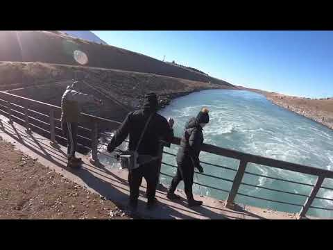 Fishing Twizel Canals For World Class Trout