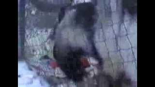 Как кормили козла в Лесной Сказке(, 2014-02-21T08:06:12.000Z)