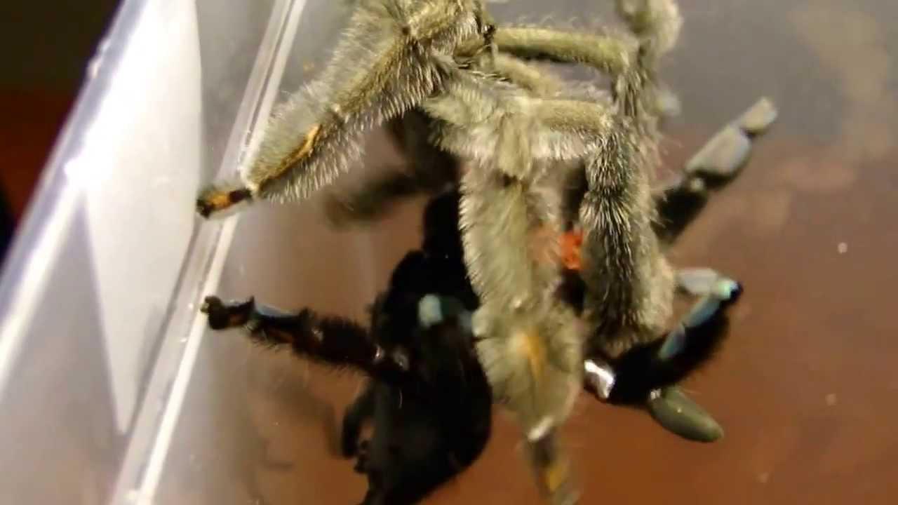 Порно фильм пауки