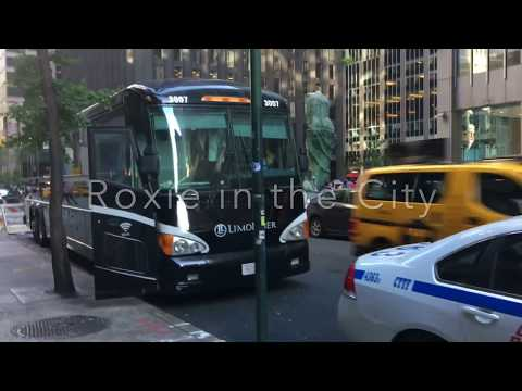 Roxie In The City Goes To Boston By Limoliner Luxury Bus.