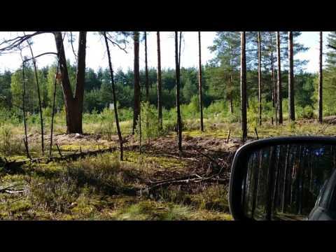 Видео Сокол хищная птица