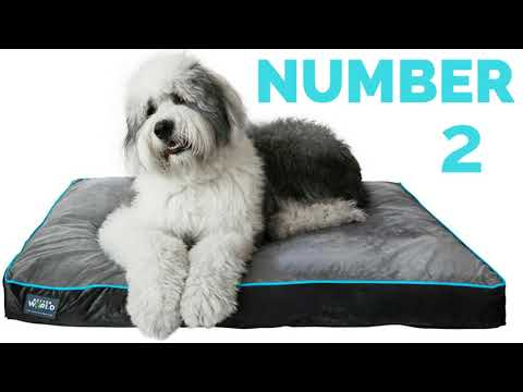 top-5-waterproof-dog-beds---the-dog-bed-blogger