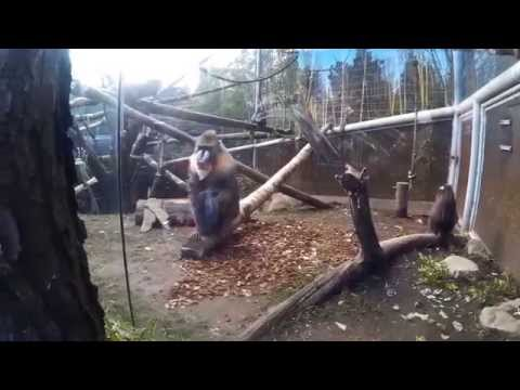 Oregon Zoo Tour 2015 - Portland, Oregon - SJ4000