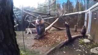 Oregon Zoo Tour 2015 - Portland, Oregon - SJ4000