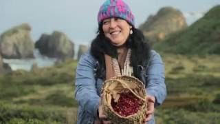 OFF THE TABLE #3: Sea Urchin & Murta Berries