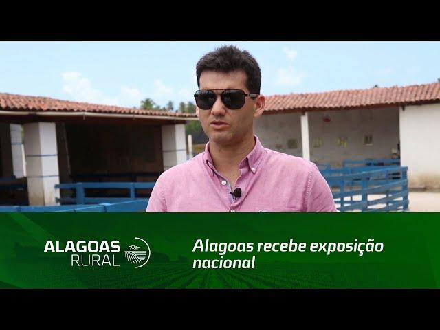 Alagoas recebe exposição nacional de ovinos Dorper e White Dorper