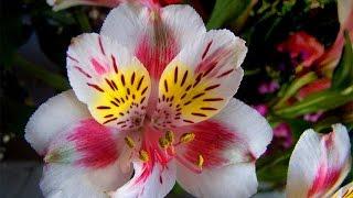 видео Опасные садовые растения