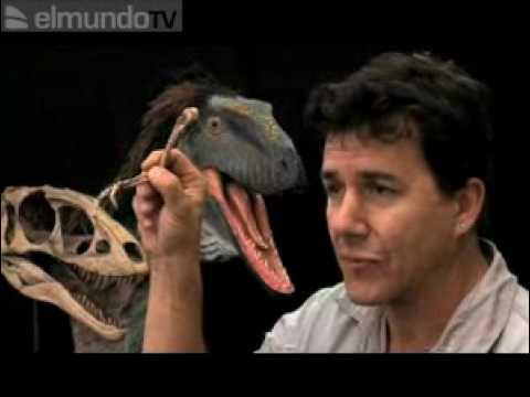 "Tiranosaurio ""Raptorex kriegsteini"""