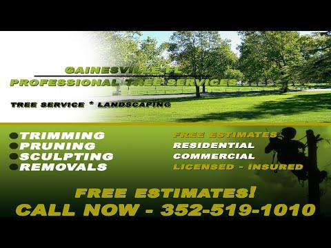 Tree Service Gainesville Fl - 352-519-1010