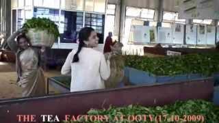 THE TEA FACTORY AT OOTY (UDAGAMANDALAM),TAMIL NADU, INDIA,(17- 10- 2009)