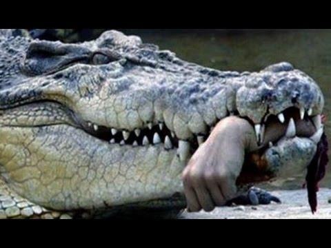 Смотреть онлайн Хищник / Predator (1987) -> Смотреть кино