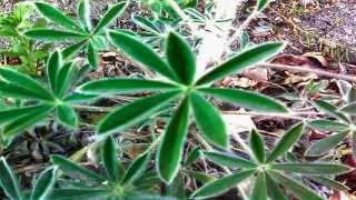 planta silvestre rara 1 botánica
