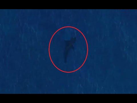 Мегалодон сушествует (съёмка со спутника)