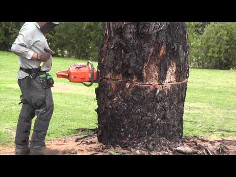 Agriexchange Dead Gum and Norfolk Island Pine 22-04-2011.mpg