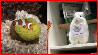 Funny and cute animals 2019 # 1 l Lovely cute animals