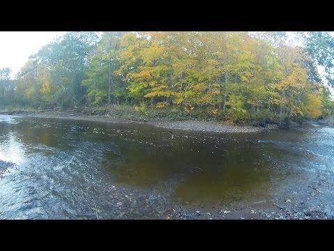 West River Pictou County Nova Scotia Atlantic Salmon Leap