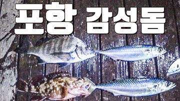 [다리tv] 포항에서 감성돔 잡기 제일 쉬운 곳!!! 고등어 & 감성돔 낚시!!!