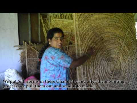 How Silk Industry Works In Bangalore Karnataka