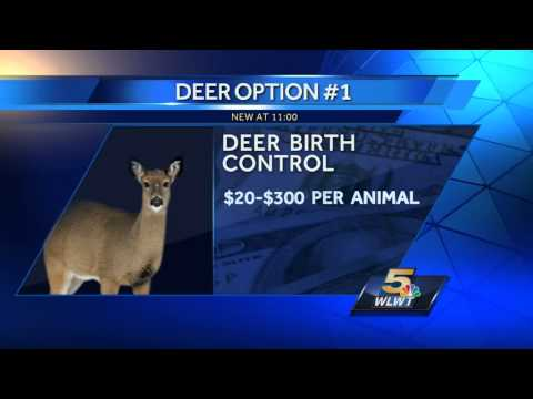 Neighbors discuss options for thining Clifton deer population