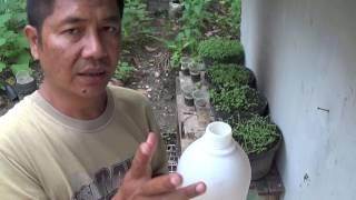 Cara Mencegah dan Membasmi Hama Tanaman Cabe dan Sayuran Organik dengan Pestisida Alami