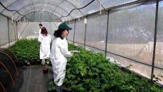 Curso de capacitación para inspectores de cuarentena agrícola