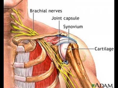 Nerves In Neck And Shoulder Diagram Da Lite Motorized Screen Wiring Simple Exercise To Reduce Nerve Pressure Bursitis Dr Mandell