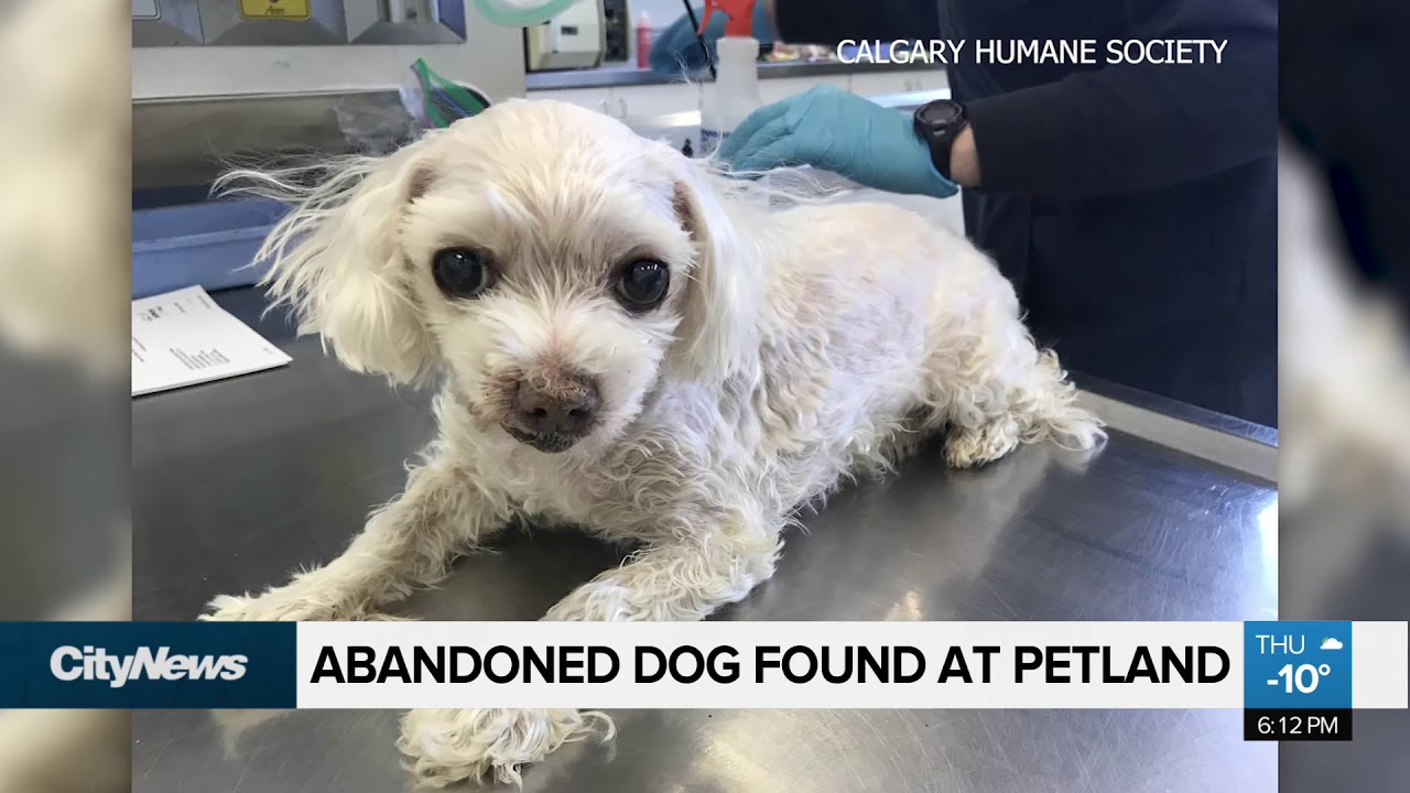 Woman allegedly abandons medically neglected dog in pet store