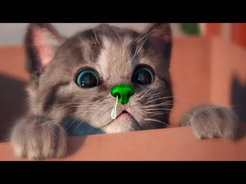Little Kitten My Favorite Cat Pet Care - Play Cute Kitten Video Games For Children