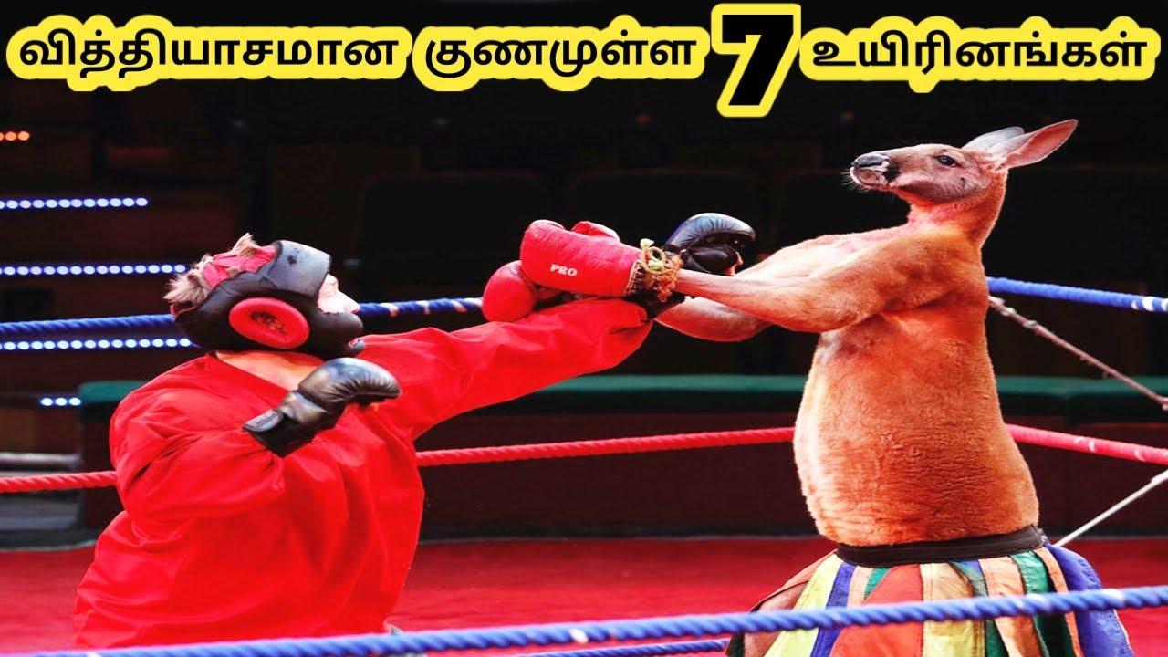 ஆச்சரியமான உயிரினங்கள் || Eight Amazing Talent Creatures Part 6 || Tamil Galatta News