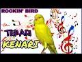 Terapi Pancingan Burung Kenari Macet Malas Bunyi Dan Kenari Muda Belajar Bunyi  Mp3 - Mp4 Download