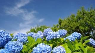 NHK 連続テレビ小説「梅ちゃん先生」ドラマ主題歌「さかさまの空」 、管...