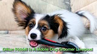 Mobile Dog Groomer Liverpool - For All Your Mobile Dog Grooming Liverpool Needs - 07725975584