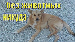 Животные Крыма вокруг меня/ Елена и зверята
