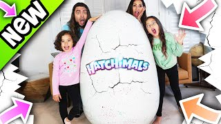 Hatchimals Giant Egg Giveaway, CollEGGtibles Secret Surprise and More with FAM JAM!