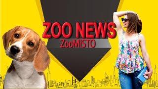 Аренда собак и эмоциональная привязка к домашним животным | Новости из мира животных #13 | ZooMisto